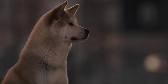 Хатико: Самый верный друг / Hachiko: A Dog's Story.